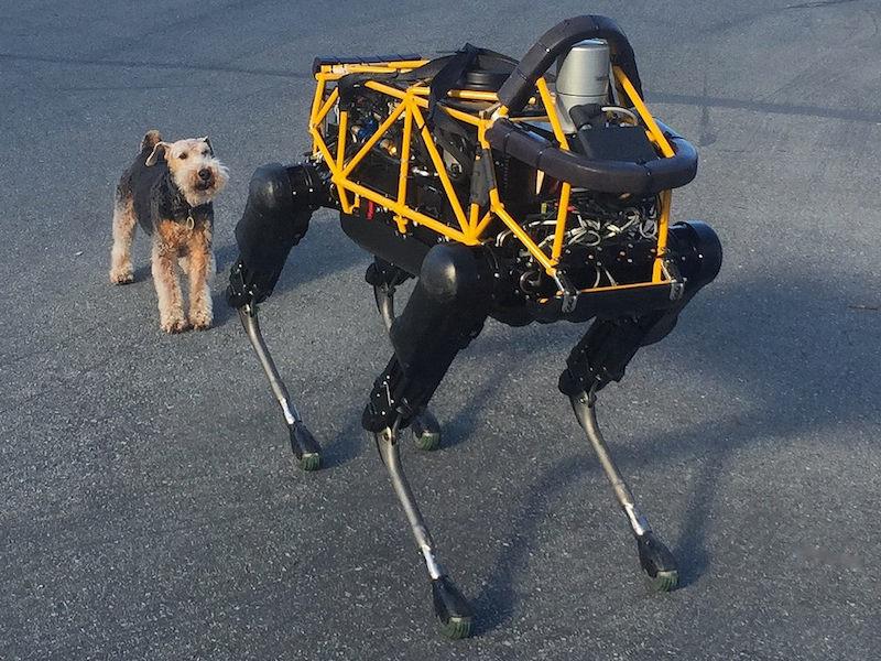 Robo Dog v IRL Dog