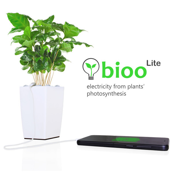 Bioo, the High-Tech Houseplant, Can Charge Your Smartphone with Plant Power