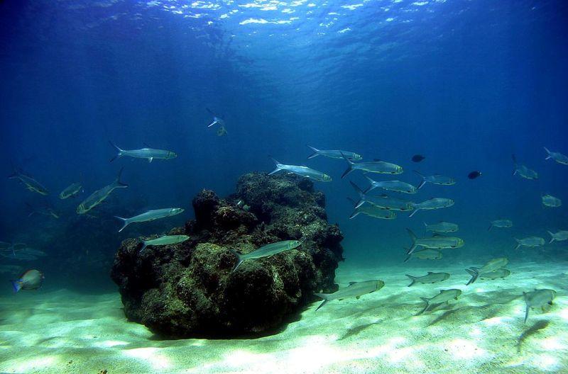Mercury Threat To Fish
