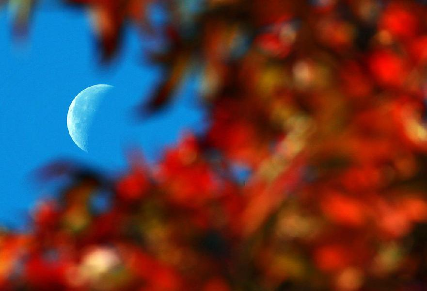 Moon and plants