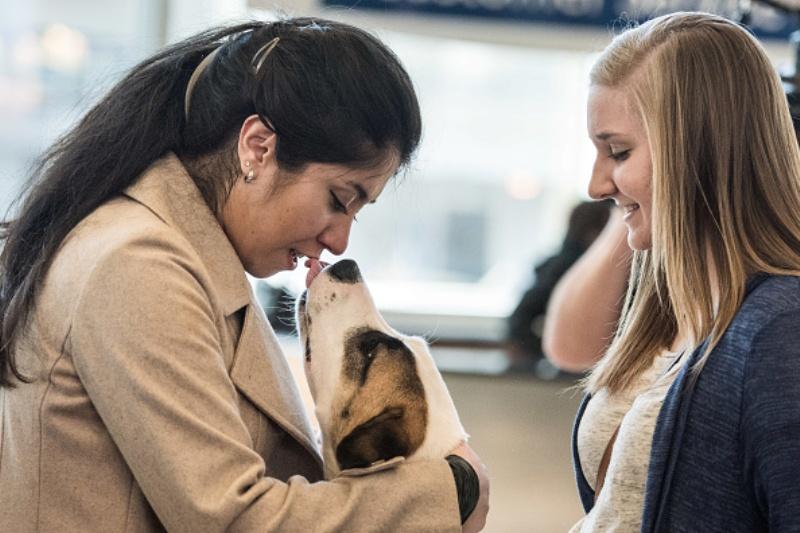 Dog human relationship