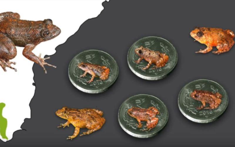 New frog species