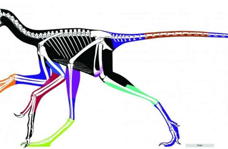 Anchiornis dinosaur