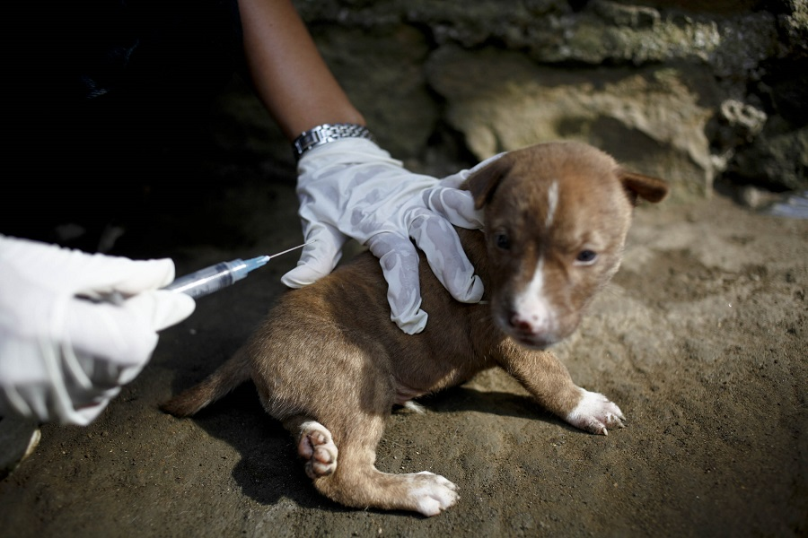 A Puppy Being Vaccinated Against Rabies