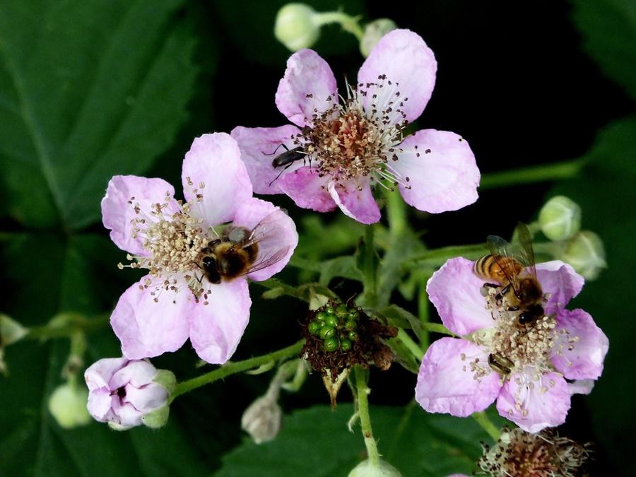 Nocturnal Pollinators