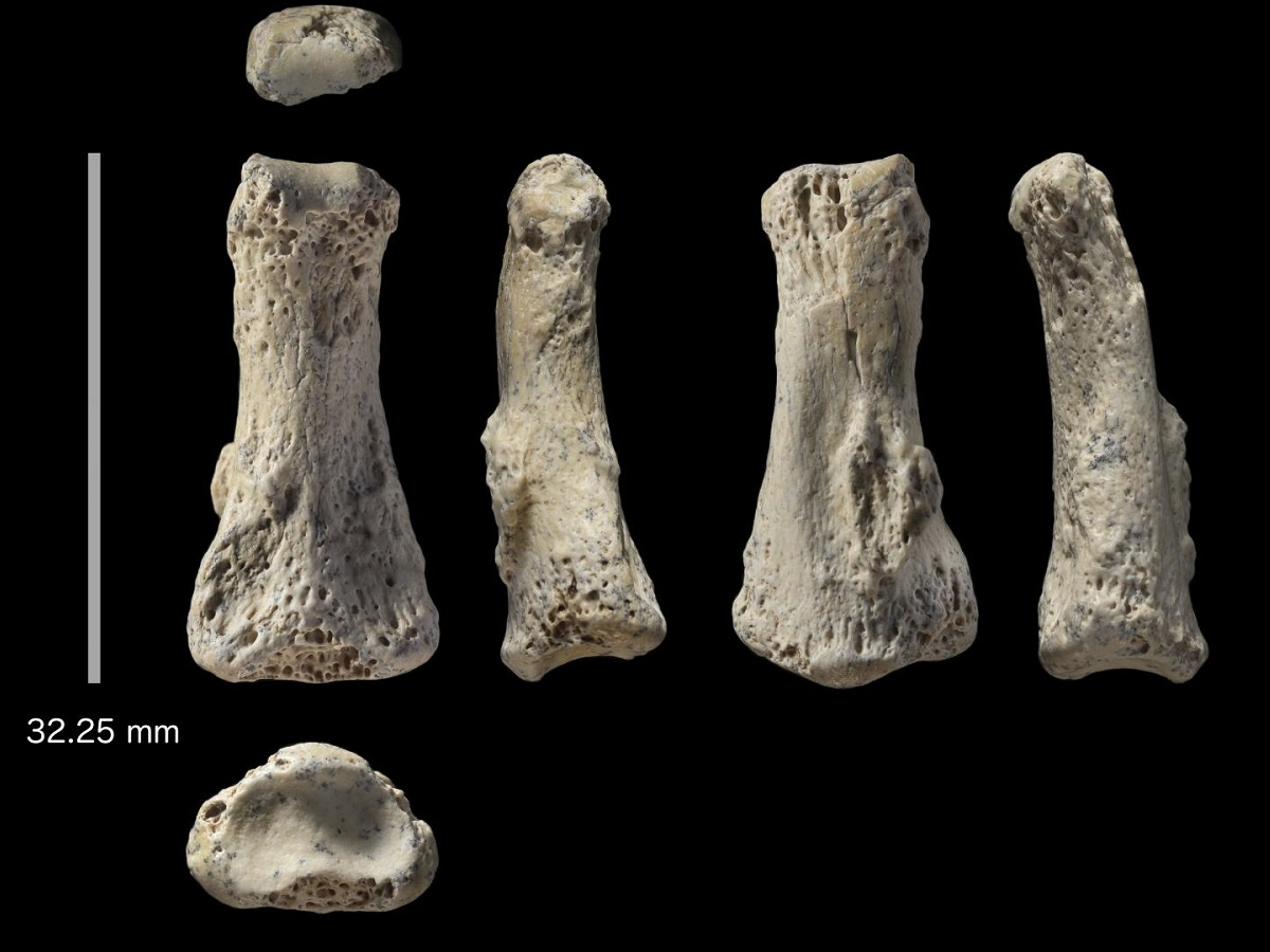 Middle finger fossil found in Saudi Arabia