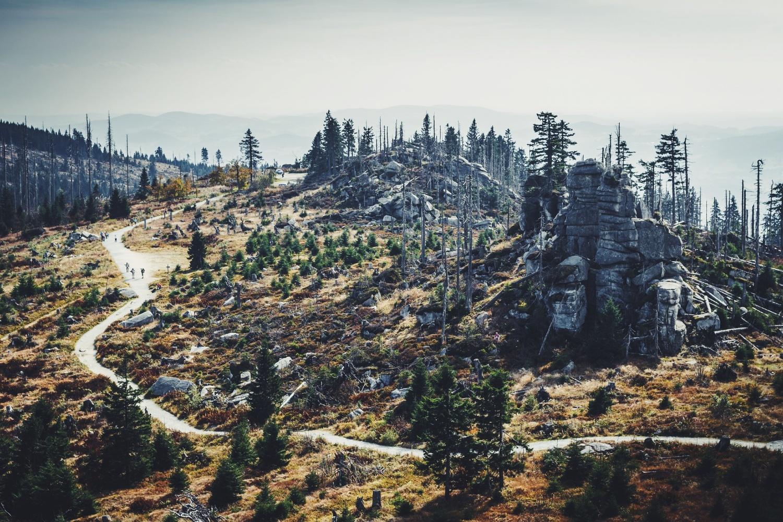 mountain reforestation
