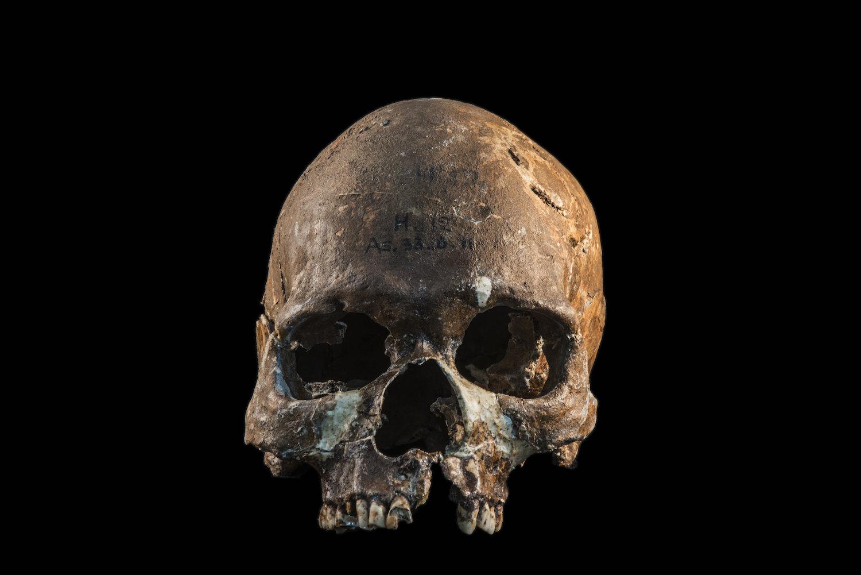 Skull of a Hoabinhian