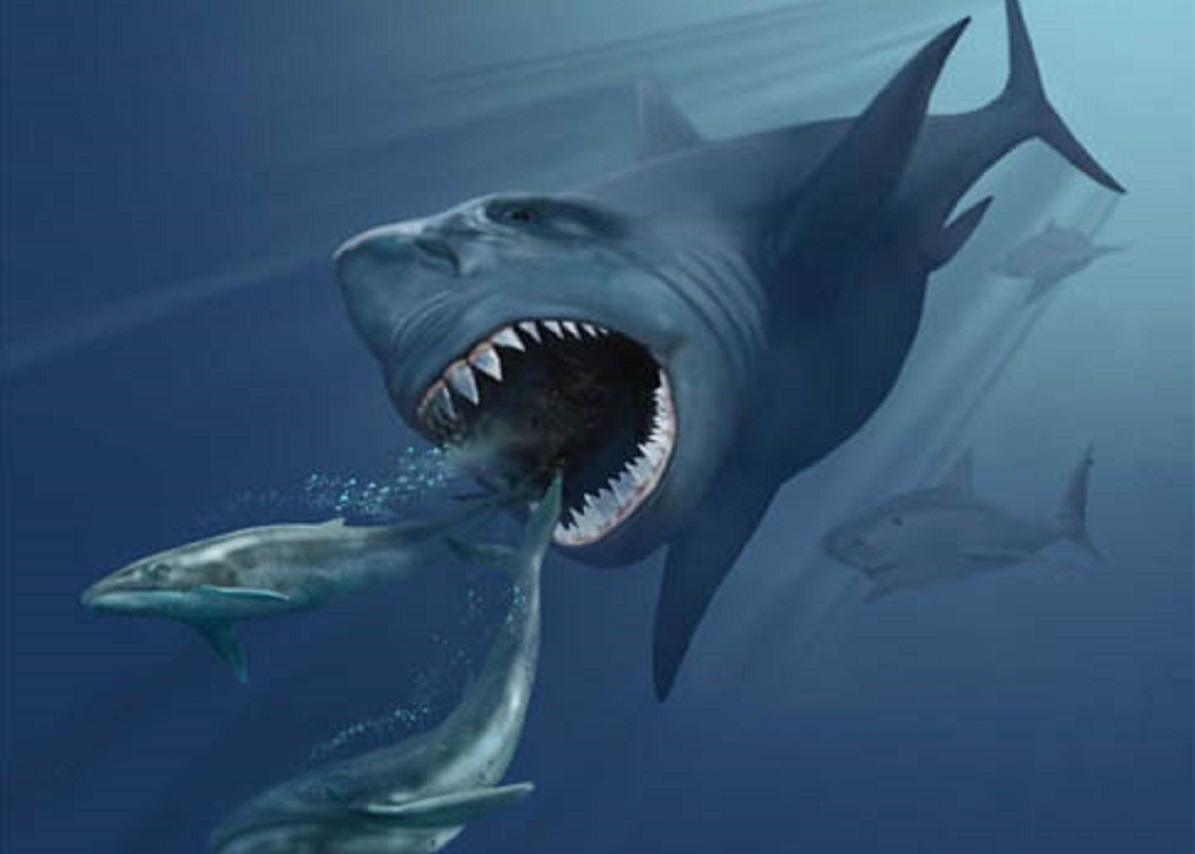 Pictured is a megalodon preying on marine creatures