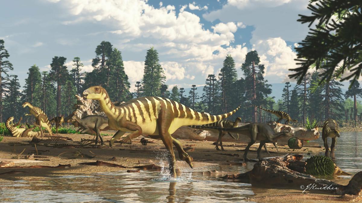 Galleonosaurus dorisae