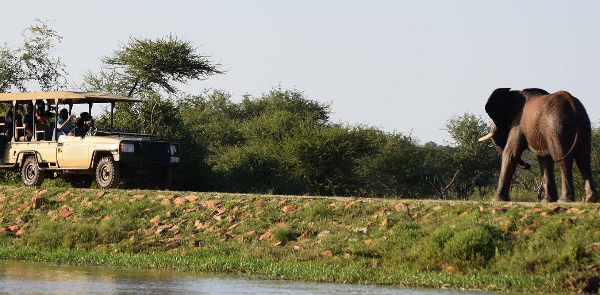 Safari tourists observing an elephant