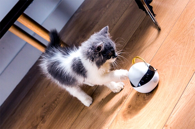 Kickstarter Launches Ebo-- Cat's New Robotic Companion