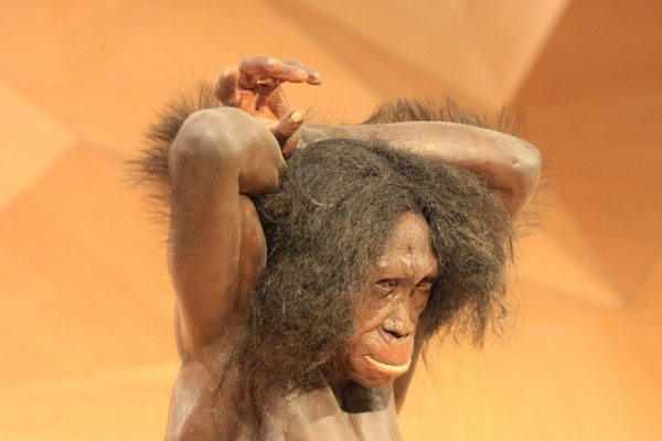 3 Million Years Ago, Humans Act Like Vegan Monkey Proves Study