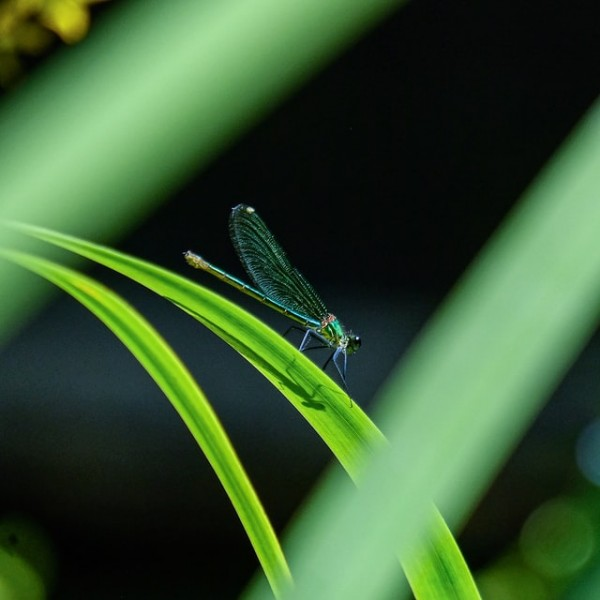 ROBO-INSECTS: New Little Drones Are Developed That Could Fly Like Insects; Can They Be Used For Future Rescue Missions?