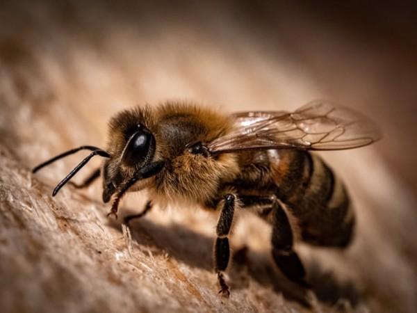 A Chronic Viral Disease Silently Kills Honey Bees Causing Weird