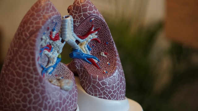 A New Antibiotic Called WLBU2 Is Developed; Experts Say It Could Fight Ventilator-Associated Lung Infections