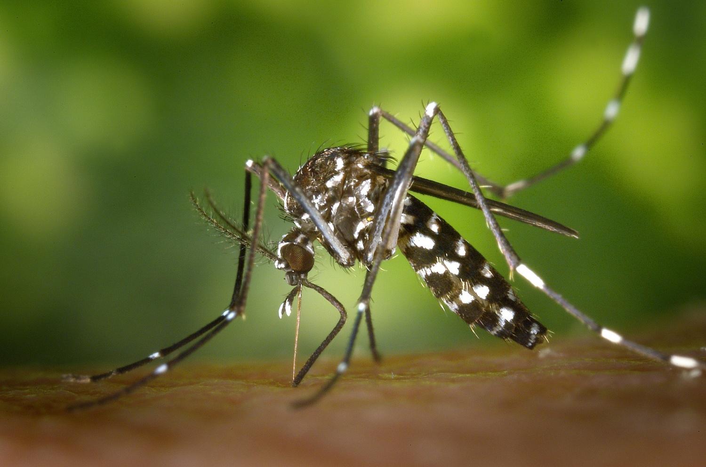 genetically modified mosquitoes Oxitec Florida Texas