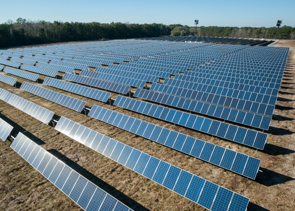 Why Thousands of Birds Are Killed in Solar Farms?