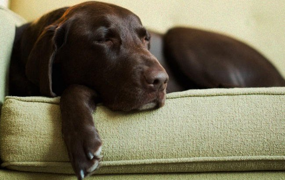 Experts Claimed That Naps More Than 1 Hour Can Increase Early Death by 30%, Leading to Heart Disease