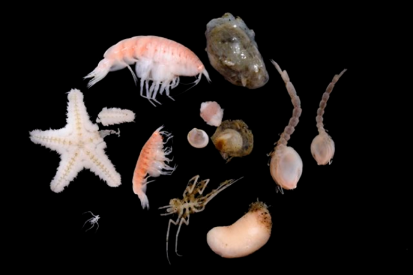 Scientists Discover 3 Weird Creatures 5,000m Below Antarctica Using Advanced Research Vessel