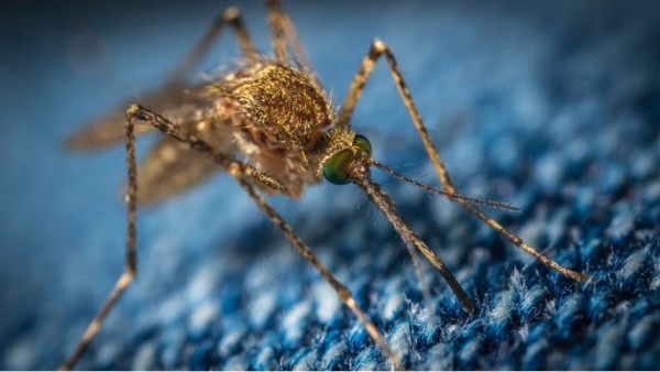 Rare Mosquito 'EEE' Virus Suspectedly Found in Michigan Adult, Kills Humans up to 33%