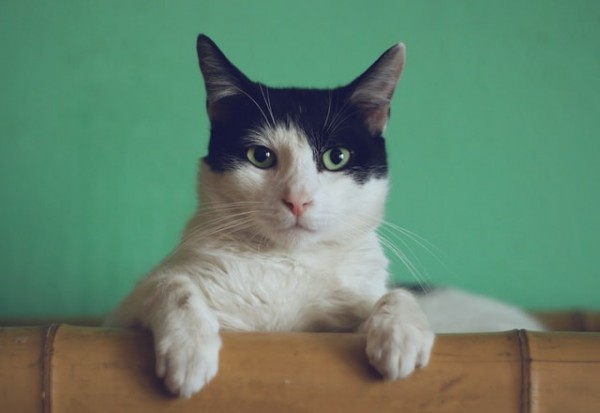 ATTN Cat Lovers: Scientists Claim Using Profile Pics Of Your and Your Cat Won't Give You a Date