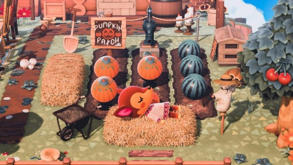 Fauna taking a nap by the pumpkin patch