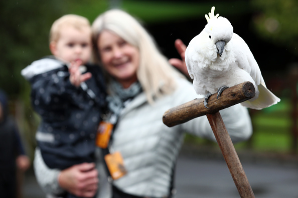 Parrots are Cute, Until They Start Cursing You; This Wild Life Park Remove Them for Swearing at Visitors