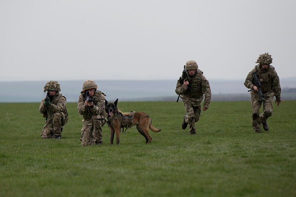 Military Dogs Wearing Goggles Are Not Only Cute; It Allows US Army Handlers to Command Them From Afar