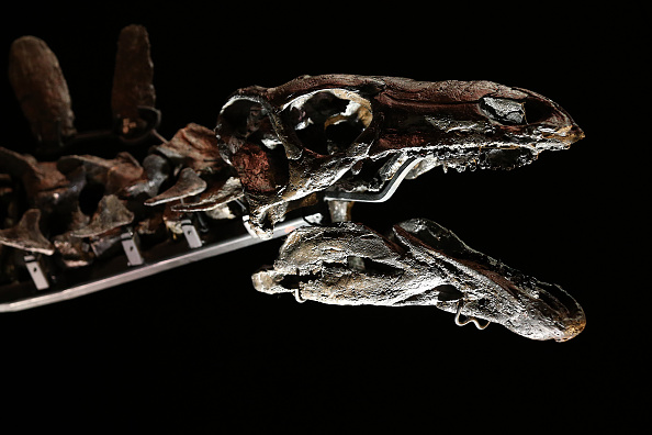 First-Ever Reconstructed Dinosaur Brain Unveiled, CT Scan Helps Scientists Create 3D Model