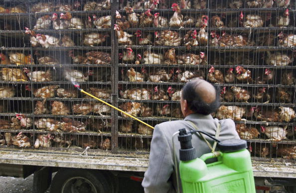 South Korea Issues Warning, Confirms 'H5N8 Bird Flu' Infection to Wild Birds