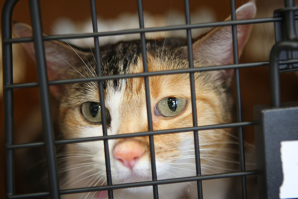 Pet Cats, Dogs May Need COVID-19 Vaccine, New Study Suggests