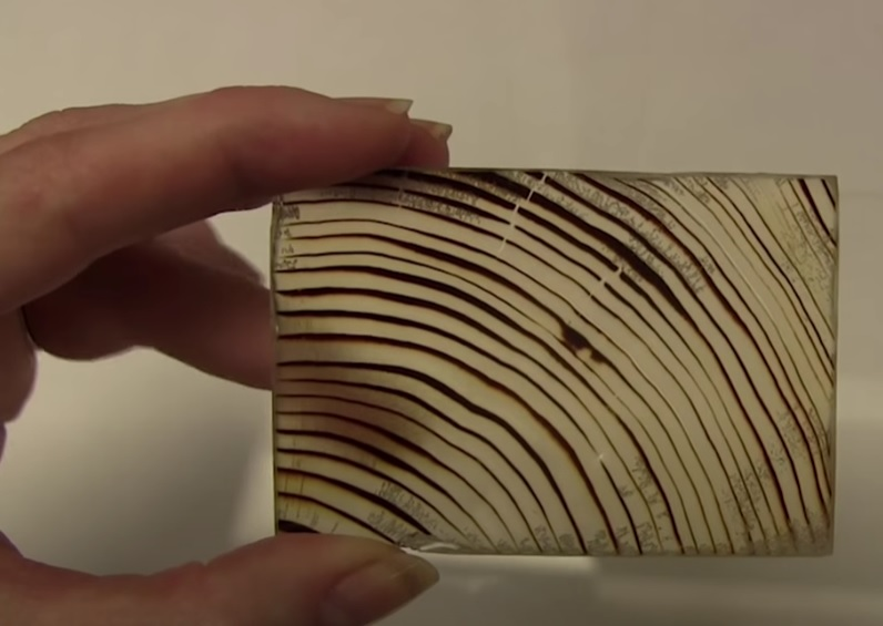 Transparent Wood that Makes Energy-Saving Windows? You Might be Replacing Your Glass Soon