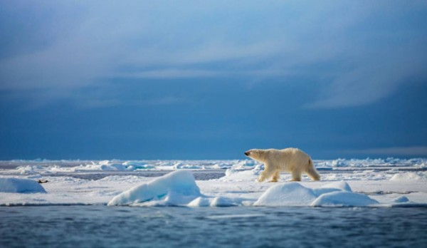 climate change can render animals extinct