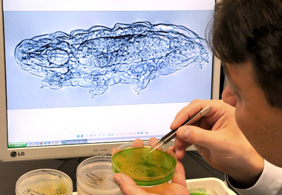 Tardigrade researcher