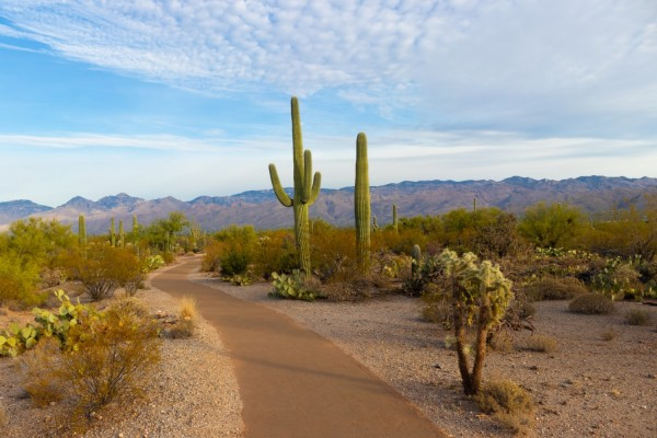 Intel, TSMC to Construct Semiconductor Plants in Arizona--Why in Water-Dependent State?