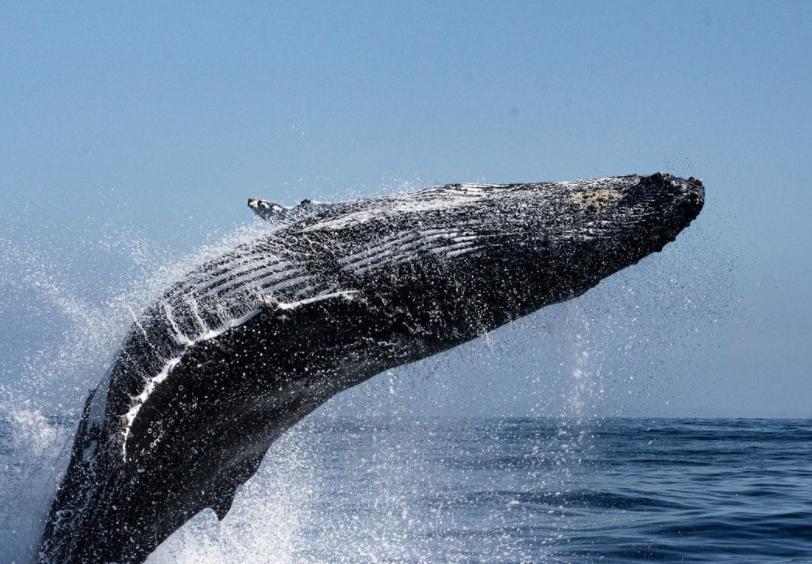 Crypto Whales Exit as 395,903 $ETH Leave Coinbase