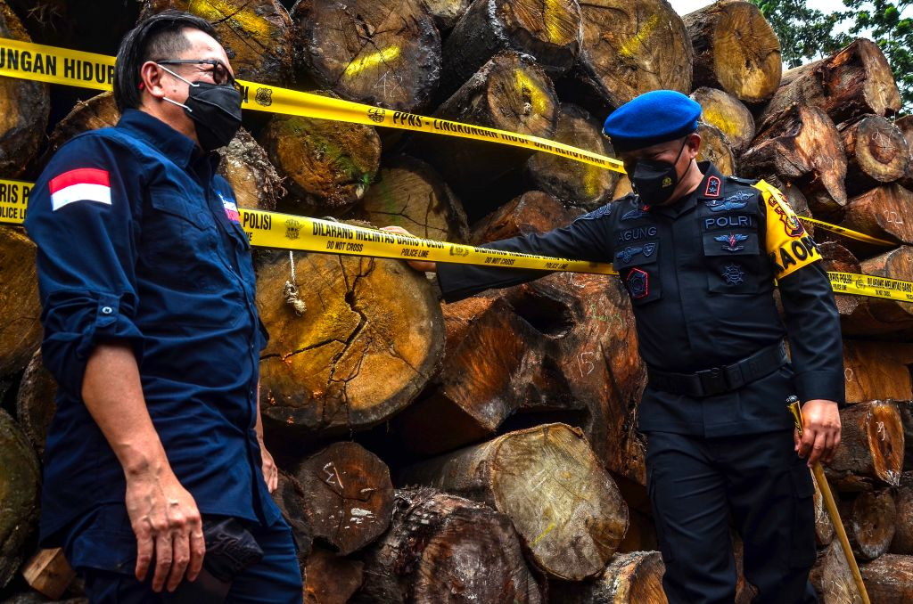 Illegal Logging / Getty Images