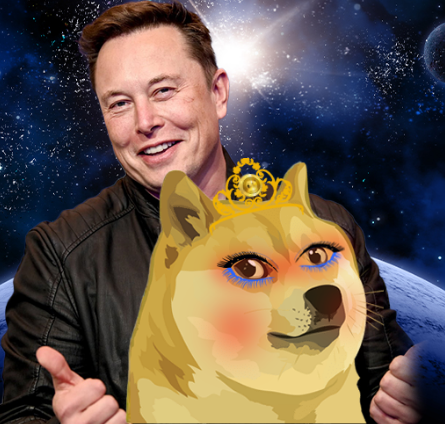 Elon Musk Says DOGE Not the Ultimate Currency   CEO Already Likes New WIFEDOGE? Growth Already 3,000%!