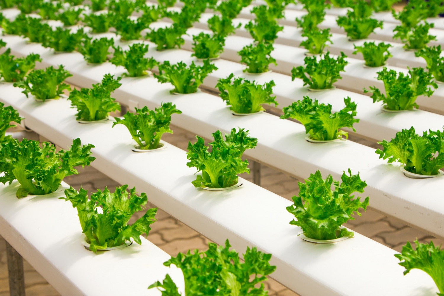 Edible Vaccine? Researchers Aim to Put mRNA Components from Pfizer, Moderna in Plants