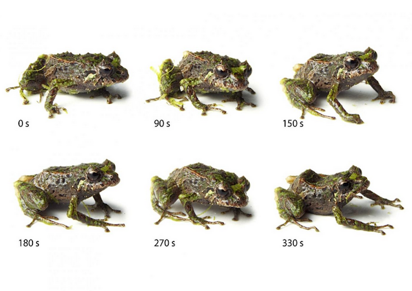Shape-shifting frog with time in seconds noted