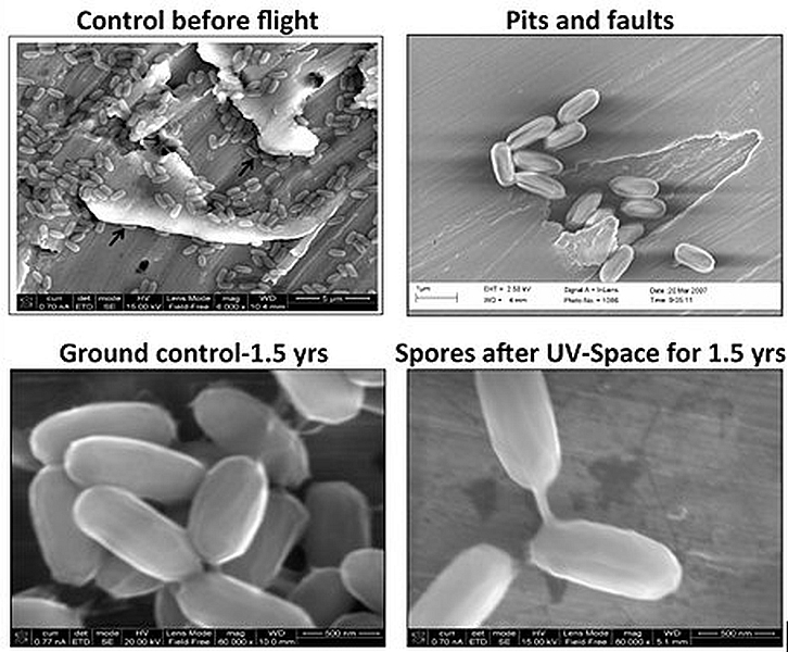Bacteria in space