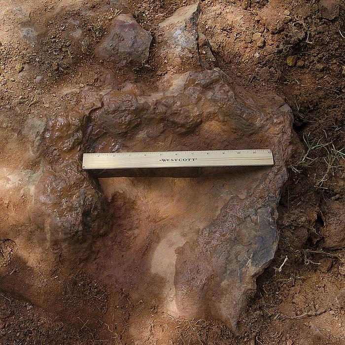 Nodosaur Footprint