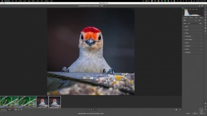 Adobe Photoshop's Super Resolution Unveils Glaring Problems--How to Use it